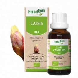 CASSIS 15ML